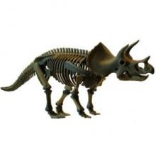 Большой Скелет динозавра - Трицератопс D502